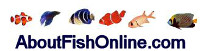 About Fish Online