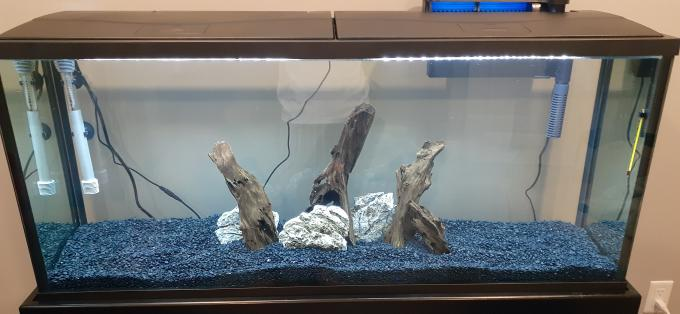 Brand New Tank