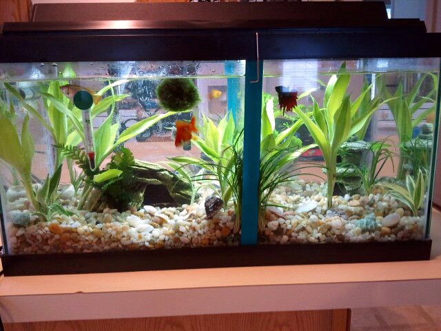 how to vermicompost with fish tanks