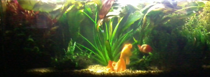 Overgrown Planted Tank