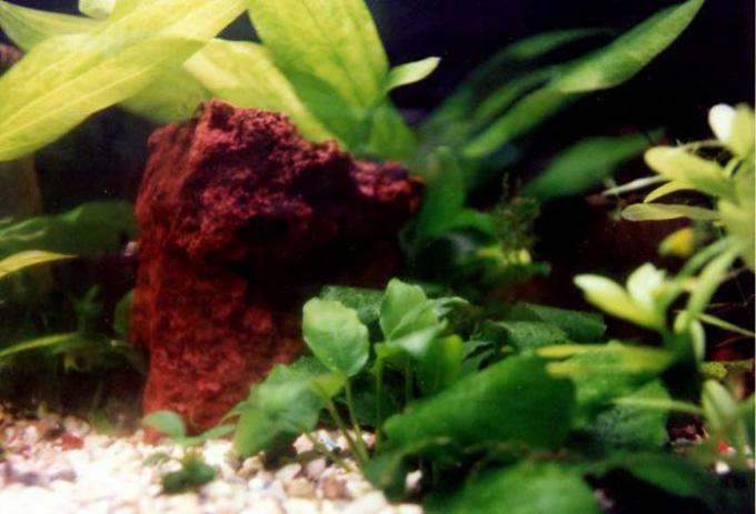 Healthy Plants in an Aquarium