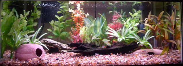A New Fish Tank